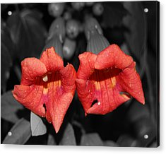 Acrylic Print featuring the photograph Two Of Hearts by Maggy Marsh