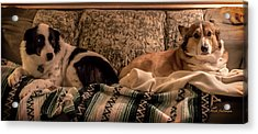 Two On The Couch Acrylic Print by Mick Anderson