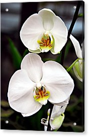 Two Orchids Acrylic Print by JoAnn Lense
