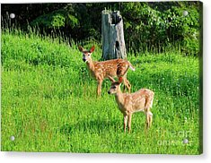 Two Out Of Three Acrylic Print