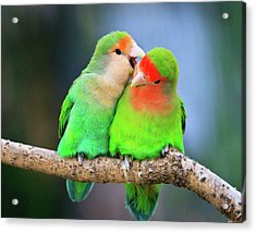 Two Peace-faced Lovebird Acrylic Print