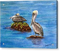 Two Pelicans Acrylic Print by Suzanne Krueger