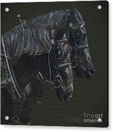 Two Percherons Acrylic Print