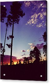 Two Pines Sunset Acrylic Print