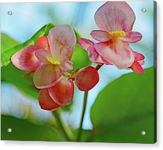 Two Pink Flowers No. 2 Acrylic Print by Sandy Taylor