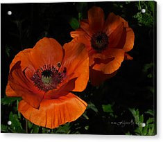 Two Poppies  And A Bee Acrylic Print