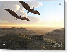 Two Pterodactyl Flying Dinosaurs Soar Acrylic Print by Corey Ford