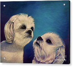 Two Puppies Acrylic Print by Zina Stromberg