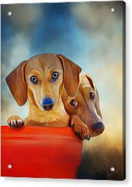 Two Pups In A Bucket 4926 - No Texture Acrylic Print