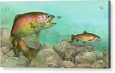 Two Rainbow Trout Acrylic Print