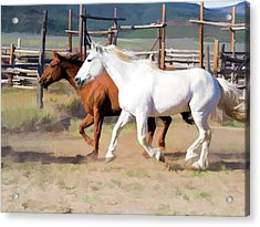 Acrylic Print featuring the digital art Two Ranch Horses Galloping Into The Corrals by Nadja Rider
