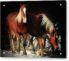 Two Red Horses  Acrylic Print by Georgiana Romanovna