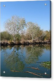 Two Reflected Acrylic Print by Laurel Powell