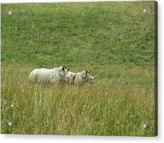 Two Rhino In The Grass Acrylic Print by George Jones