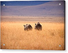 Two Rhino's Acrylic Print by Adam Romanowicz