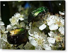 Acrylic Print featuring the photograph Two Scarabs Metallic Green by Jean Bernard Roussilhe