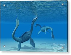 Two Sea Dragons Acrylic Print by Corey Ford