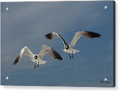 Two Seagulls Acrylic Print by Dennis Stein