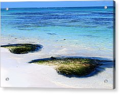 Two Seaweed Mounds On Punta Cana Resort Beach Acrylic Print