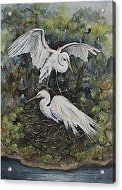 Two Snowy Egrets Acrylic Print by Laurie Tietjen