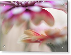 Acrylic Print featuring the photograph Two Souls 1. Macro Gerbera by Jenny Rainbow