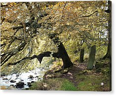 Two Standing Stones Beside Hebden Water In Autumn  Acrylic Print