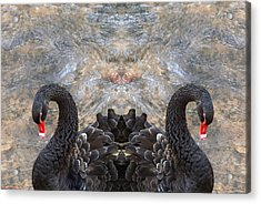 Two Swans And The Lost Souls... Acrylic Print by Arik Baltinester