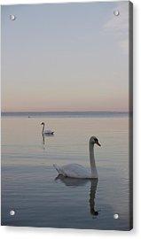 Two Swans Acrylic Print by Stanislovas Kairys