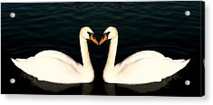 Two Symmetrical White Love Swans Acrylic Print