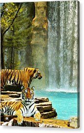 Two Tigers Acrylic Print