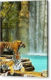 Two Tigers Acrylic Print