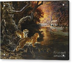Two Tigers On The Hunt Acrylic Print