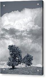 Two Trees #9249 Acrylic Print