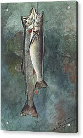 Two Trout Acrylic Print by Winslow Homer