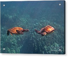 Two Turtle Tango Acrylic Print