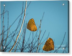 Acrylic Print featuring the photograph Two Warriors  by Ana V Ramirez