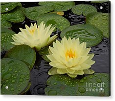 Two Water Lilies In The Rain Acrylic Print