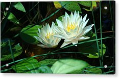 Two Waterlilies Acrylic Print by Angela Annas