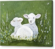 Two Wee Sheep Acrylic Print by Virginia McLaren