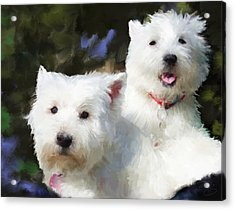 Two Westies Acrylic Print