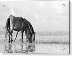 Two Wild Mustangs Acrylic Print