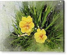 Two Yellow Beauties-2 Acrylic Print
