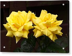 Two Yellow Rose Buds Acrylic Print by Stephen Athea