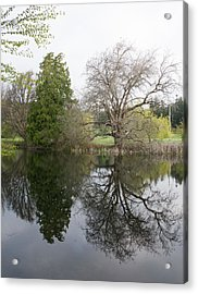 Two Trees Reflected Acrylic Print by Marilyn Wilson