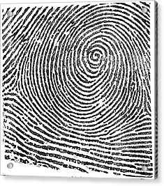Typical Whorl Pattern In 1900 Acrylic Print