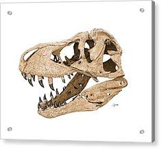 Tyrannosaurus Skull Acrylic Print