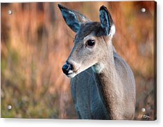 Tzavaot Acrylic Print by Bill Stephens