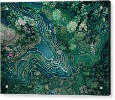 Ubud Rice Terrace Acrylic Print