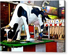 Udderly Unexpected Acrylic Print by Amelia Racca