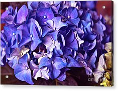 Acrylic Print featuring the photograph Ultra Violet Dance by Silva Wischeropp